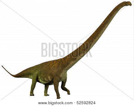 Mamenchisaurus Hochuanensis Profile
