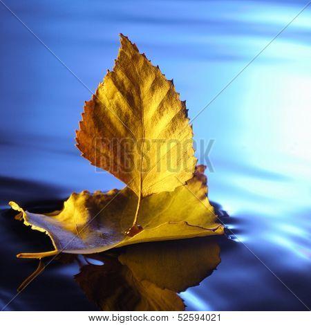 leaf ship in blue water