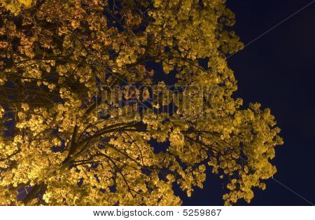 Tree In Nights