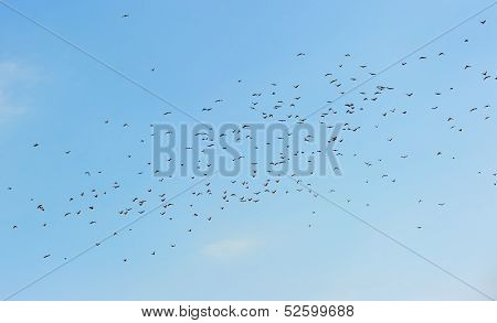 Many birds in the sky