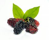 pic of mulberry  - Group of mulberries with a leaves Isolated on a white background - JPG