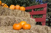 stock photo of haystacks  - ripe pumpkins on a horse cart with haystack in the fall season - JPG