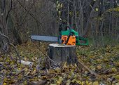 stock photo of chainsaw  - Forest - JPG