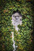 picture of inri  - Jesus head embossing between the ivy in a cemetery - JPG