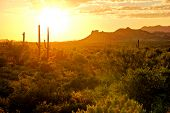 stock photo of superstition mountains  - Sunset view of the Arizona desert with cacti and mountains