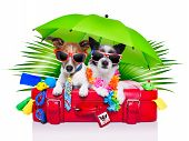 stock photo of toy dog  - holiday dogs on a red bag dressed as tourists - JPG