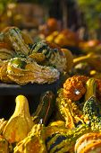 Gorgeous Gourds 3