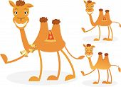 stock photo of humping  - Cartoon camel set - JPG
