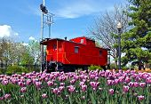 picture of caboose  - Bright red caboose with Dutch tulip field.