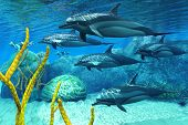 stock photo of porpoise  - A pod of Striped Dolphins swim along a reef looking for fish prey - JPG