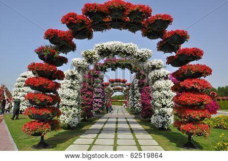 Dubai Miracle Garden in the UAE,