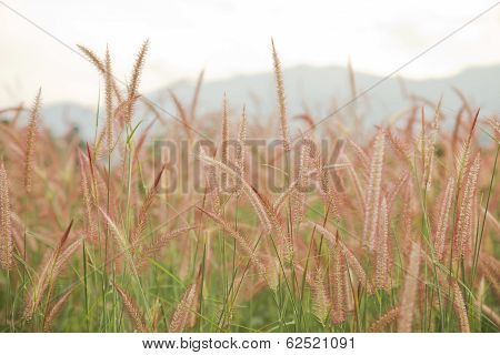 Swaying the grass with sunset sky background