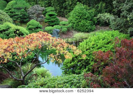 Beautiful Pond At The Japanese Tea Garden Of San Francisco