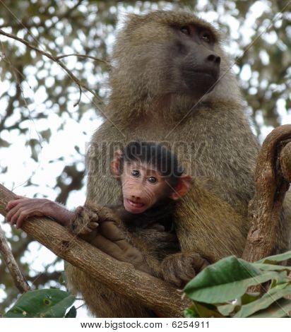 Mum And Baby Monkeys