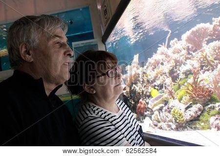 Senior Couple Watching Fishes