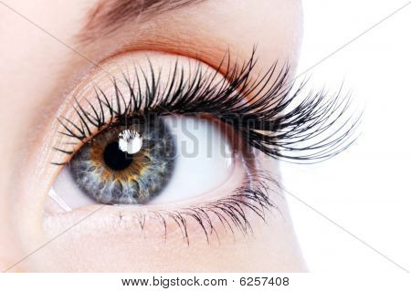 Beauty female Eye mit Curl lange falschen Wimpern