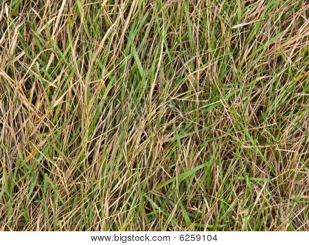 Green Juicy Length And A Dry Grass