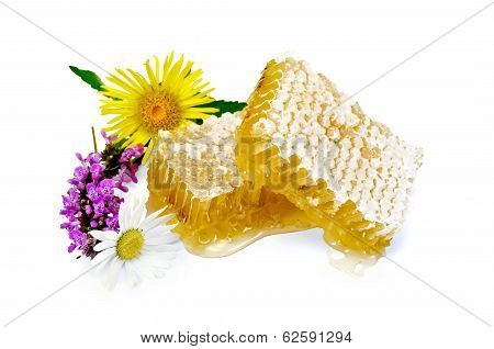 Honeycomb With Flowers