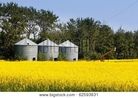 Three Silos Canola Rapeseed Agriculture Field