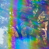 foto of prism  - Spectrum colors light leak and faded trees abstract forest reflections through vintage prism filter - JPG