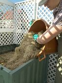 stock photo of decomposition  - Female gardener dumping cut lawn grass into green plastic compost bin - JPG