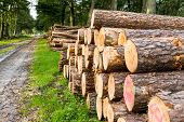 stock photo of deforestation  - Freshly sawn logs in a forest setting in the Netherlands