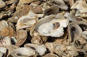 stock photo of landfills  - Oyster shells used for landfill in Palacios - JPG