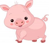 picture of baby pig  - Farm animals - JPG