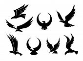 image of hawks  - Setof black silhouettes of graceful flying eagles with their outspread wings for heraldry and hunting design - JPG
