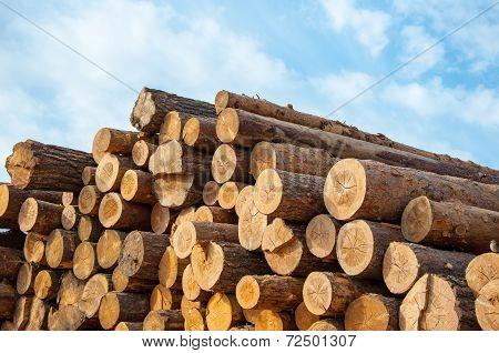Timber Or Saw Timber