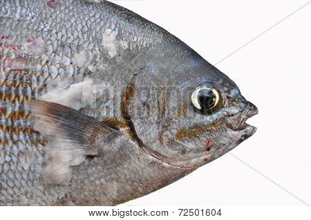 Fresh fish isolate on white back ground, Fillet of Fish, Healthy food, Fresh fish from sea.