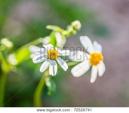 Closeup Grass Flower