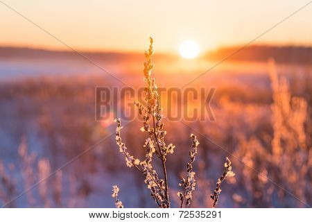 Frosty Grass At Winter Sunset