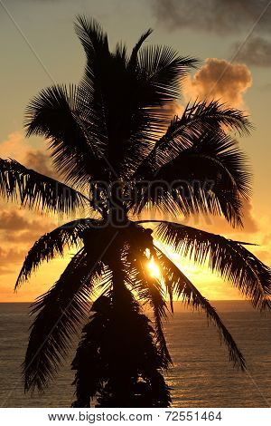 Tropical Palm Tree Sunset, Maui, Hawaii