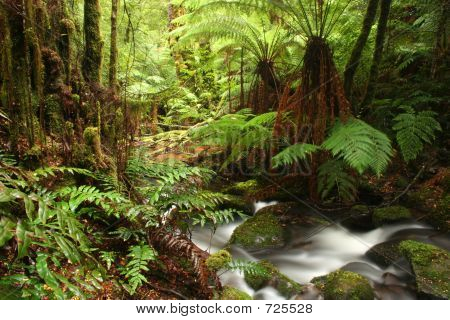 Antigua selva