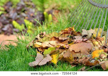 Dead Leaves In Garden