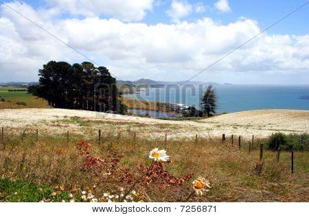 Field of flowers, Tasmania