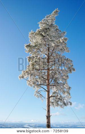 Winter Tree, Germany