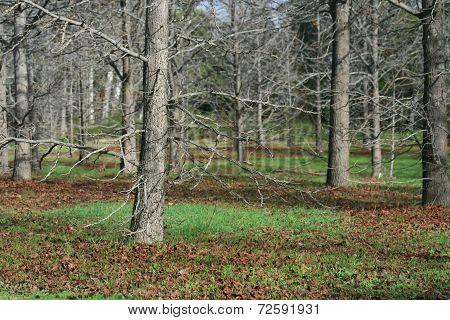 Winter Forest ? Landscape
