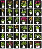 picture of peyote  - icons on black background theme houseplants and flowers - JPG