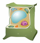 image of chloroplast  - the plant cell obviously also has a cell wall and chloroplast - JPG