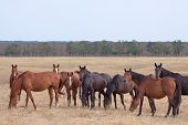 foto of steppes  - Herd of horses in the steppe at autumn day - JPG