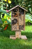 picture of stick-bugs  - Wooden insect house decorative bug hotel ladybird and bee home for butterfly hibernation and ecological gardening - JPG