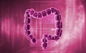 foto of intestines  - Digital illustration of large intestine in colour background - JPG