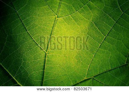 Leaf nerves