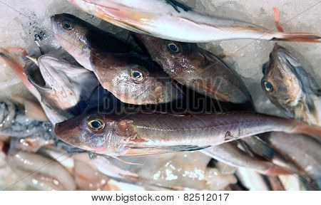 Fresh Tub Gurnard For Sale In Fish Market