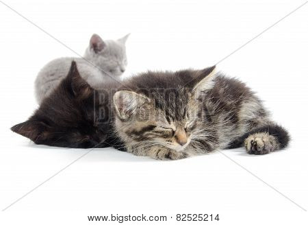 Cute Kittens Sleeping