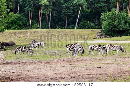 Life In The Safari Park