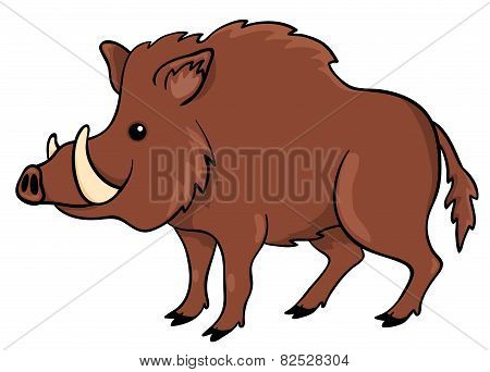 Boar Isolated On White