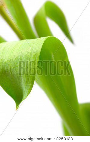Green Leaf Floral Background Over White